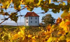Vinski podrum Zlati grič